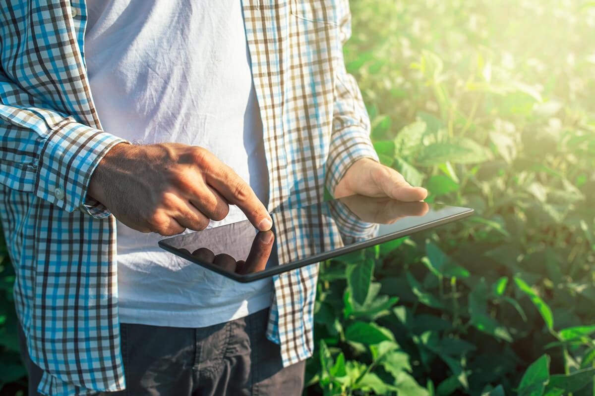 Como a inovação na agroecologia abre novas possibilidades de negócio