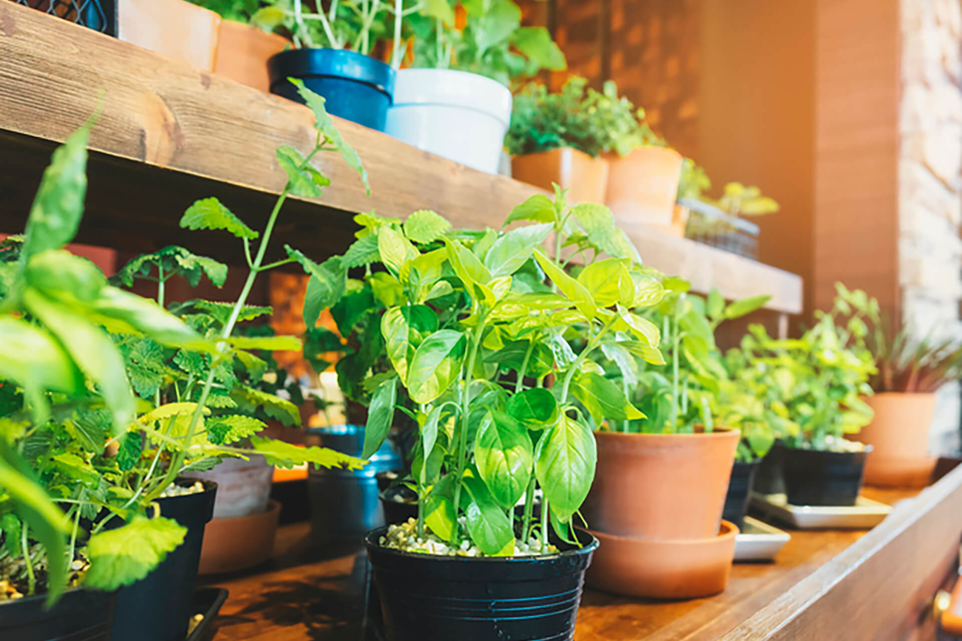 Cresce a tendência de jardinagem urbana. Saiba como empresas inovam