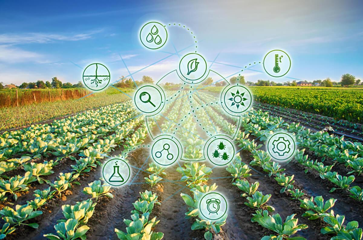 Vale do Piracicaba: conheça o polo de tecnologia em agricultura